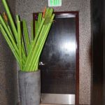 iPic plant and black metal door close up Thumbnail