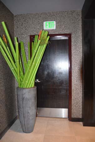iPic plant and black metal door close up